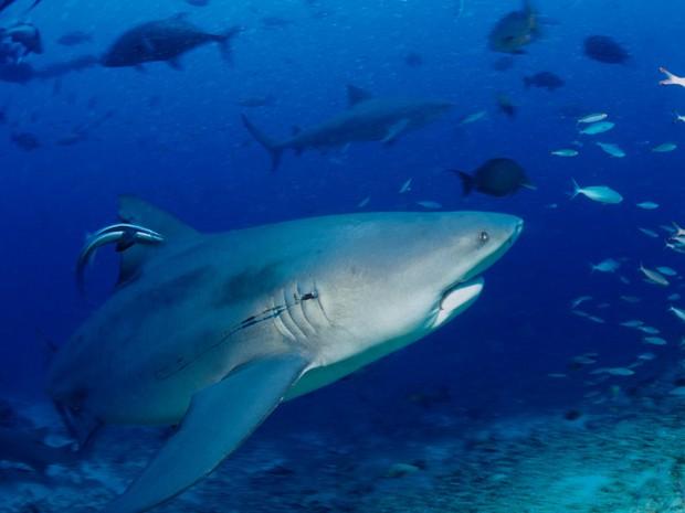 Ngày càng có nhiều người bị cá mập tấn công hơn và đây là lý do thực sự đằng sau - Ảnh 4.
