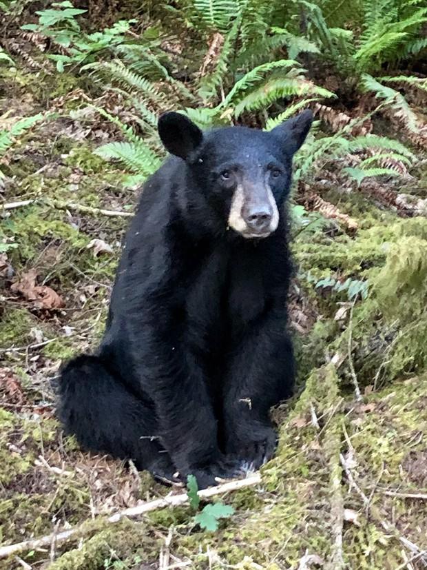 Gấu con đi lạc bị bắn chết chỉ vì quá thân thiện với con người - Ảnh 1.