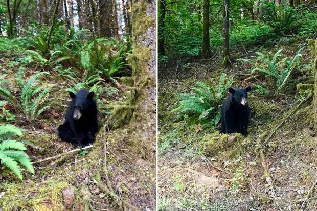 Gấu con đi lạc bị bắn chết chỉ vì quá thân thiện với con người - Ảnh 2.