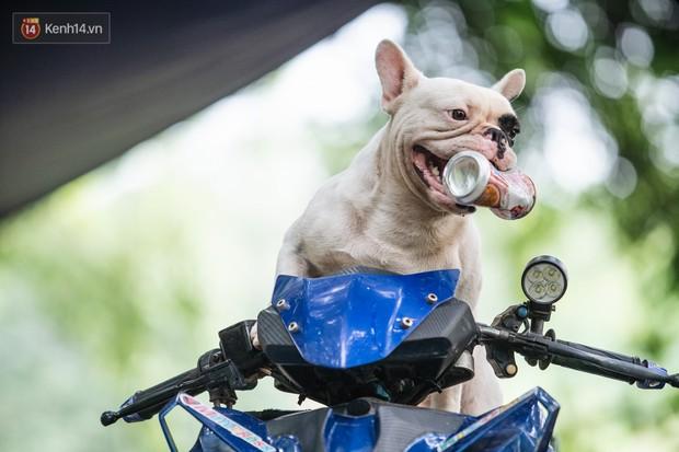 Đây là gia tài siêu to khổng lồ của Ủn - Chú chó thích đi nhặt ve chai ở Hà Nội - Ảnh 10.