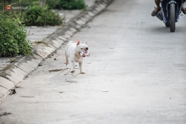 Đây là gia tài siêu to khổng lồ của Ủn - Chú chó thích đi nhặt ve chai ở Hà Nội - Ảnh 2.