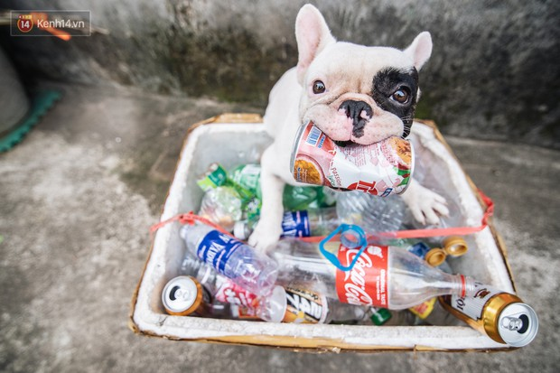 Đây là gia tài siêu to khổng lồ của Ủn - Chú chó thích đi nhặt ve chai ở Hà Nội - Ảnh 3.
