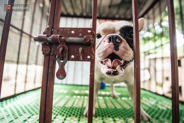 Đây là gia tài siêu to khổng lồ của Ủn - Chú chó thích đi nhặt ve chai ở Hà Nội - Ảnh 11.
