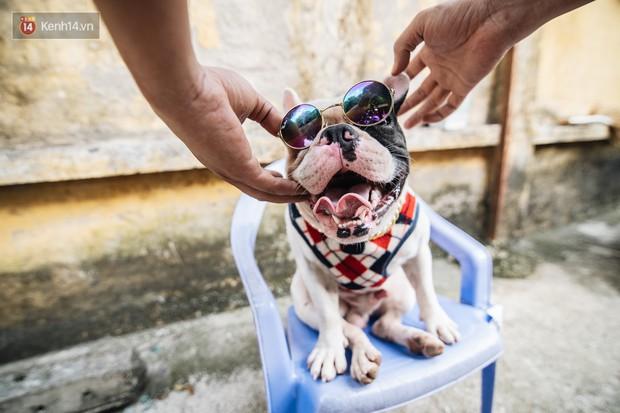 Đây là gia tài siêu to khổng lồ của Ủn - Chú chó thích đi nhặt ve chai ở Hà Nội - Ảnh 6.