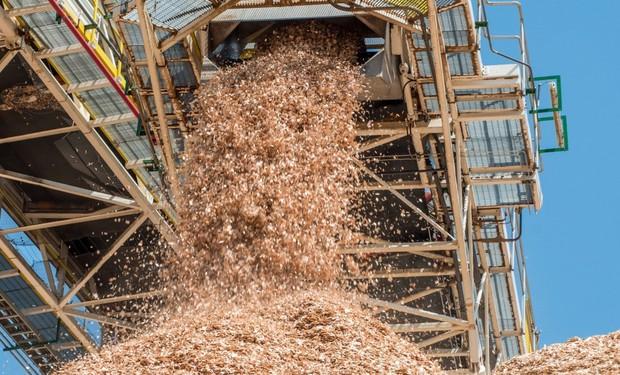 Người ta có thể sản xuất được bao nhiêu giấy từ một cái cây nhỉ? Đáp án đây này - Ảnh 4.