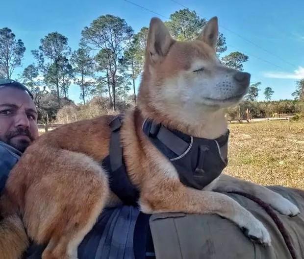 Câu chuyện của chú chó mù bị trầm cảm, được ông chủ cõng đi khắp thế giới cho khuây khỏa - Ảnh 7.
