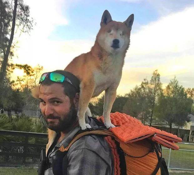 Câu chuyện của chú chó mù bị trầm cảm, được ông chủ cõng đi khắp thế giới cho khuây khỏa - Ảnh 8.