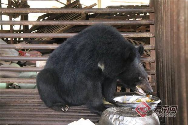 Hai năm tưởng nuôi được chó siêu to khổng lồ, người đàn ông giật mình nhận ra nó là... gấu đen - Ảnh 1.