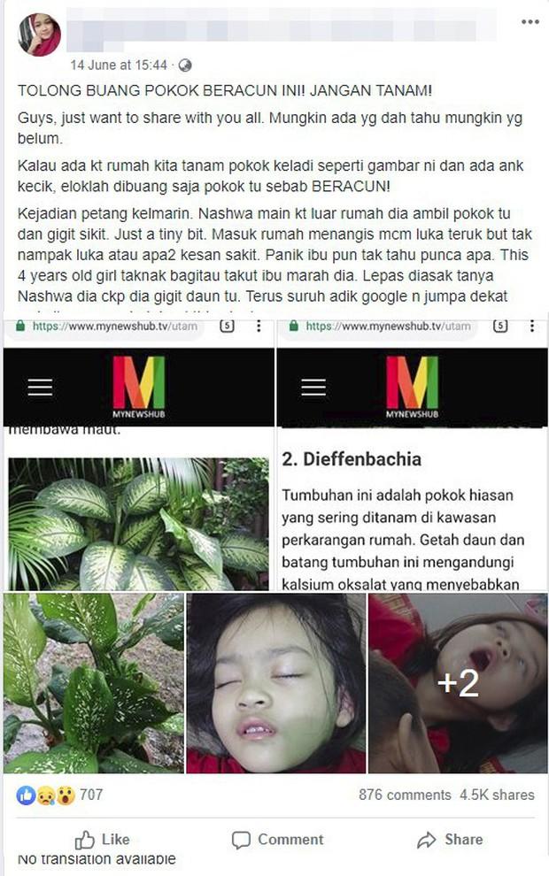 Bé gái 4 tuổi bị co giật, sưng môi, nguy hiểm tính mạng vì cắn phải lá của loại cây mà hầu như nhà nào cũng trồng trong nhà - Ảnh 1.