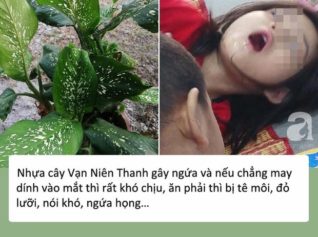 Bé gái 4 tuổi bị co giật, sưng môi, nguy hiểm tính mạng vì cắn phải lá của loại cây mà hầu như nhà nào cũng trồng trong nhà - Ảnh 2.