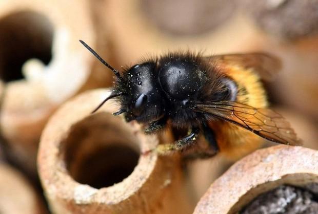 Hệ lụy gì đằng sau hiện tượng nhiều loài ong hoang dã bắt đầu sử dụng nhựa làm vật liệu xây tổ - Ảnh 2.