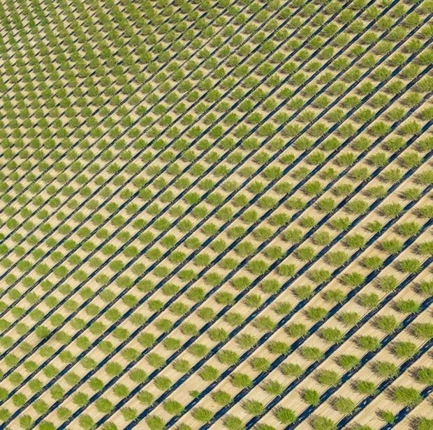 Khi những nông trại hóa thành bức ảnh nghệ thuật đẹp mê hồn dưới góc nhìn từ máy bay - Ảnh 8.