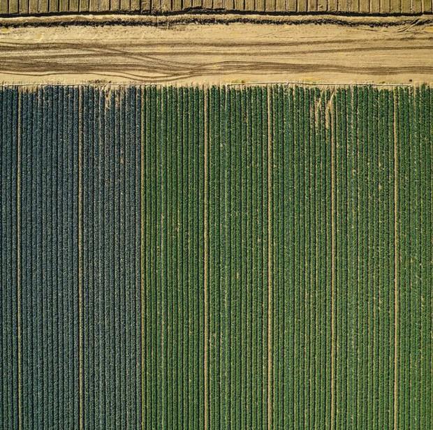Khi những nông trại hóa thành bức ảnh nghệ thuật đẹp mê hồn dưới góc nhìn từ máy bay - Ảnh 10.