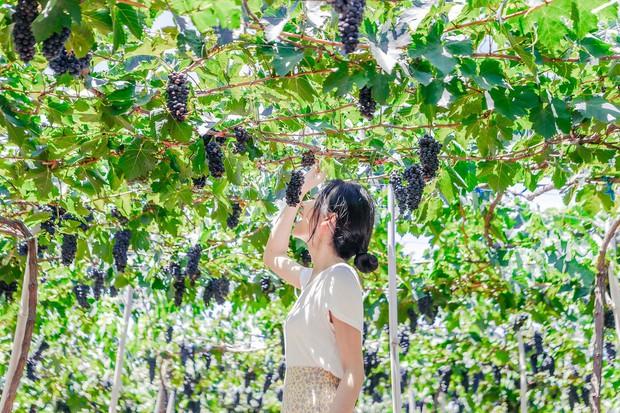 Cánh đồng quạt gió và vườn nho Ba Mọi tại Ninh Thuận: Hai địa điểm check-in siêu to khổng lồ, lại còn miễn phí nữa chứ! - Ảnh 6.