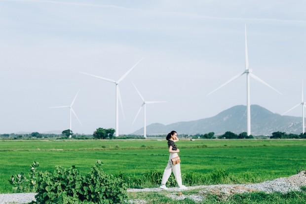 Cánh đồng quạt gió và vườn nho Ba Mọi tại Ninh Thuận: Hai địa điểm check-in siêu to khổng lồ, lại còn miễn phí nữa chứ! - Ảnh 3.