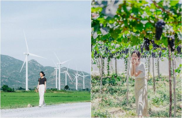 Cánh đồng quạt gió và vườn nho Ba Mọi tại Ninh Thuận: Hai địa điểm check-in siêu to khổng lồ, lại còn miễn phí nữa chứ! - Ảnh 1.