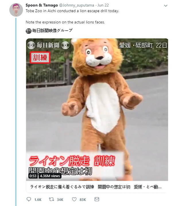 Clip: Nhân viên sở thú mặc đồ sư tử để diễn tập cảnh thú xổng chuồng, nhưng biểu cảm của sư tử thật mới là điều khiến dân mạng chú ý - Ảnh 6.