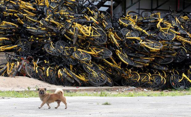 Câu chuyện buồn của Ofo, từ một startup trị giá 2 tỷ USD bây giờ chẳng còn lại gì ngoài những đống xe đạp hỏng chất cao như núi - Ảnh 2.