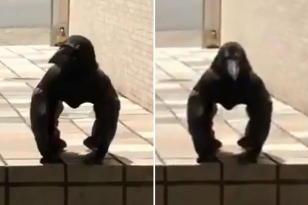 Clip gây lú cực mạnh: Tưởng khỉ đột mỏ nhọn đứng phơi nắng nhưng sự thật khác biệt hoàn toàn - Ảnh 2.