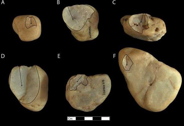 Bạn tưởng chỉ loài người biết tiến hóa? Có nhiều loài khỉ đã bước vào thời kỳ đồ đá từ 3000 năm trước rồi đó - Ảnh 2.