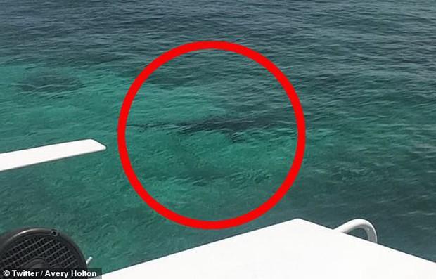 Lặn ngắm san hô, cô gái 21 tuổi mất mạng vì bị đàn cá mập tấn công, mẹ đứng trên bờ gào thét vô vọng - Ảnh 3.