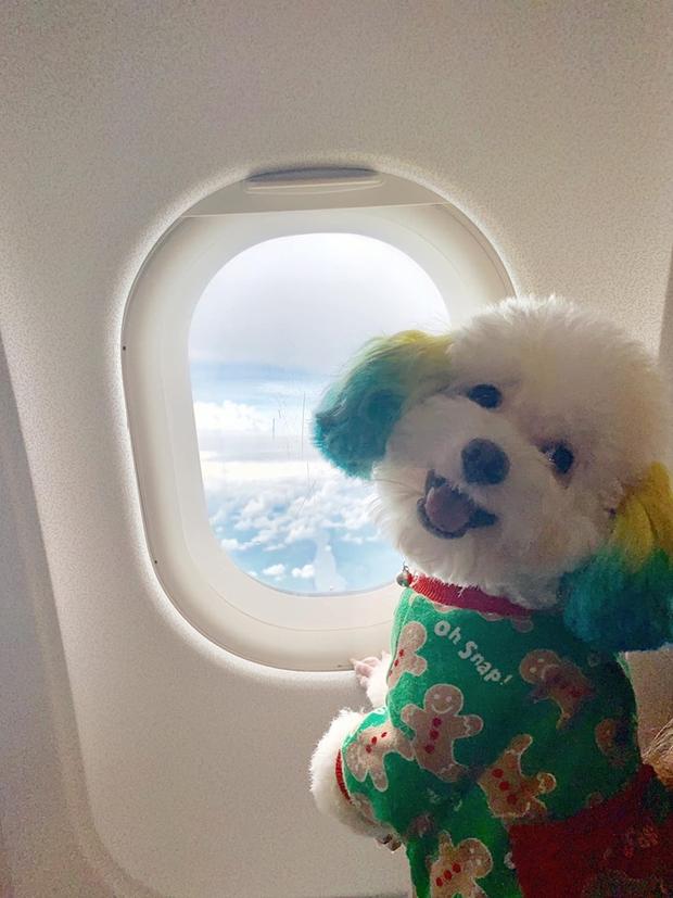 Đăng ảnh chú chó cưng hớn hở khi đi du lịch bằng máy bay, cô nàng được dân tình đua nhau vào hỏi làm cách nào để được như thế? - Ảnh 1.