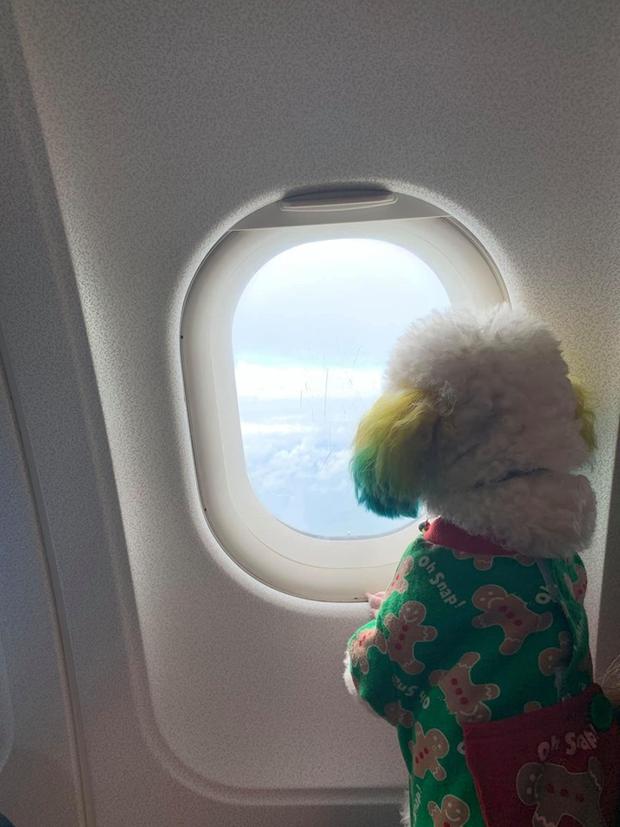 Đăng ảnh chú chó cưng hớn hở khi đi du lịch bằng máy bay, cô nàng được dân tình đua nhau vào hỏi làm cách nào để được như thế? - Ảnh 6.