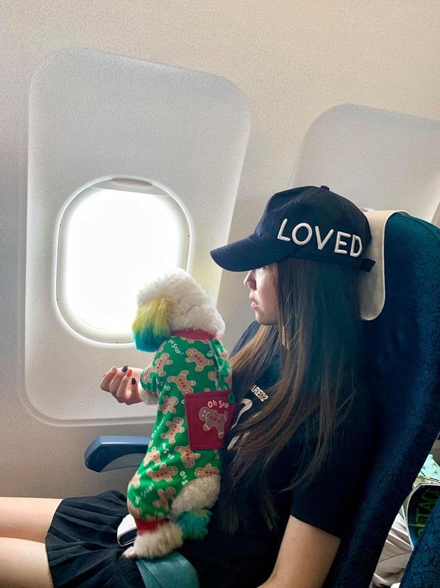 Đăng ảnh chú chó cưng hớn hở khi đi du lịch bằng máy bay, cô nàng được dân tình đua nhau vào hỏi làm cách nào để được như thế? - Ảnh 3.