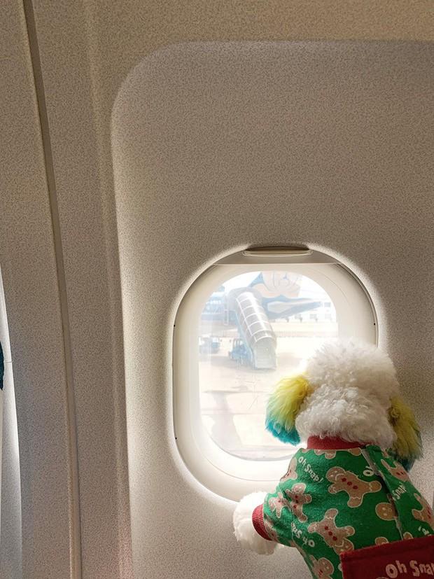 Đăng ảnh chú chó cưng hớn hở khi đi du lịch bằng máy bay, cô nàng được dân tình đua nhau vào hỏi làm cách nào để được như thế? - Ảnh 10.