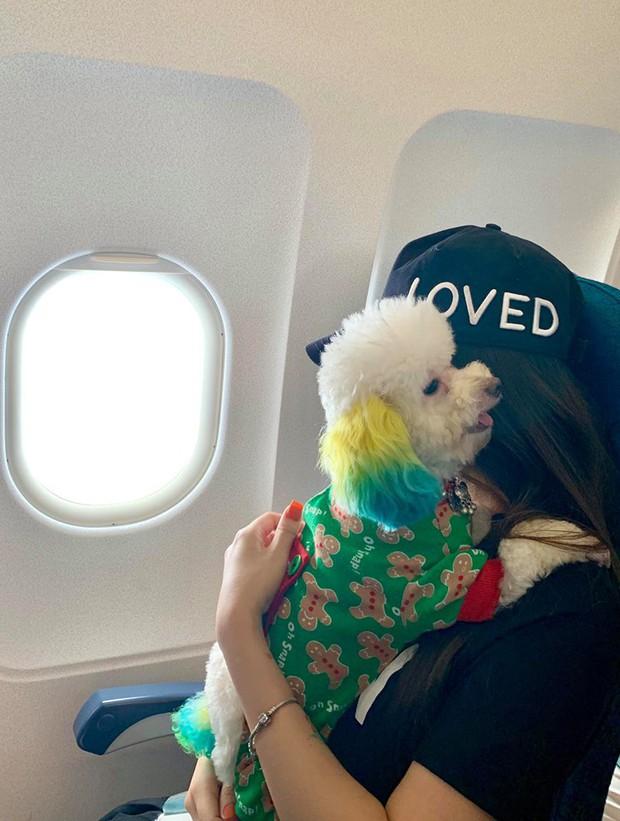 Đăng ảnh chú chó cưng hớn hở khi đi du lịch bằng máy bay, cô nàng được dân tình đua nhau vào hỏi làm cách nào để được như thế? - Ảnh 9.