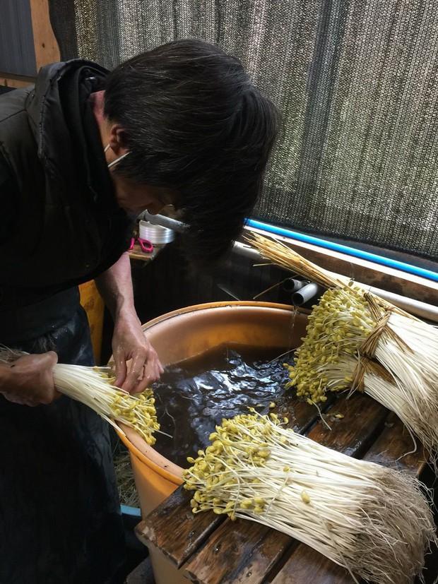 Bí mật thú vị của Ohori Onsen - loại giá đỗ dài hơn 2 gang tay: Trồng ở suối nước nóng, hơn 400.000 nghìn/kg - Ảnh 4.