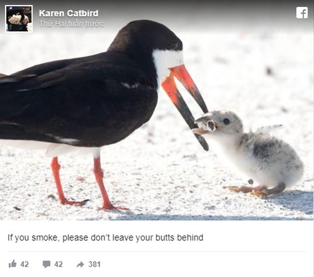 Bức ảnh chim mẹ mớm con ăn... đầu lọc thuốc lá khiến loài người phải suy ngẫm: Chúng ta đã đầu độc thiên nhiên đến mức báo động! - Ảnh 2.