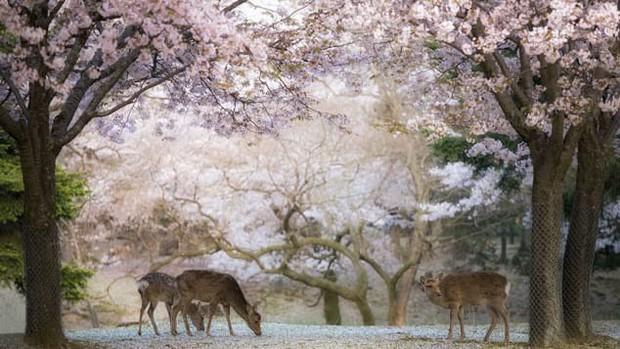 Là điểm đến du lịch hàng đầu châu Á, Osaka Nhật Bản chứa đựng vô vàn điều thú vị mà du khách lần đầu đặt chân đến không nên bỏ qua  - Ảnh 7.