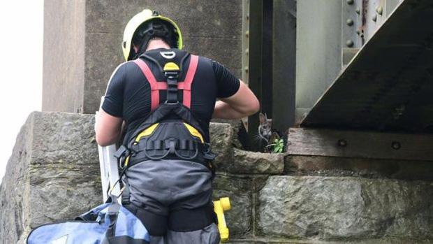 Lính cứu hộ Anh tiêu tốn 175 triệu đồng để mở chiến dịch giải cứu mèo kẹt trên cầu, đến ngày thứ 6 thì thất bại vì boss tự đi về nhà - Ảnh 3.