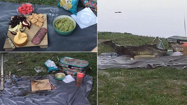 Cặp đôi đang đi picnic thì bị cá sấu đến hăm doạ, trấn lột hết sạch đồ ăn - Ảnh 3.