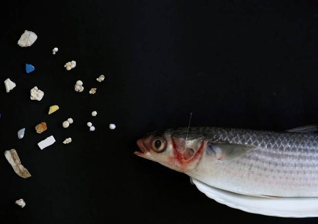 Mỗi người Mỹ đang ăn 74.000 mảnh rác nhựa mỗi năm - câu chuyện đáng buồn đang xảy ra trên toàn thế giới - Ảnh 4.