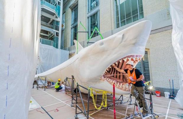 """Ngắm công trình chế tác """"Siêu cá mập"""" khiến người xem không khỏi ngỡ ngàng vì độ khủng của nó - Ảnh 2."""