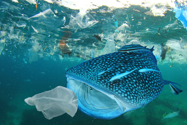 Mỗi người Mỹ đang ăn 74.000 mảnh rác nhựa mỗi năm - câu chuyện đáng buồn đang xảy ra trên toàn thế giới - Ảnh 3.