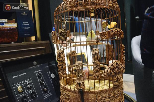 Gặp ông trùm thời trang với bộ sưu tập chim khủng 10 tỷ đồng: Chim nằm điều hòa, có camera an ninh và hai nhân viên chăm sóc đặc biệt - Ảnh 5.