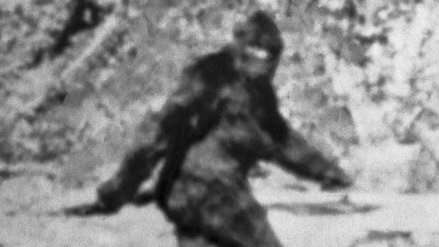 Người đàn ông gửi lông Bigfoot cho FBI đòi phân tích, 40 năm sau mới nhận được đáp án lúc gần đất xa trời - Ảnh 2.