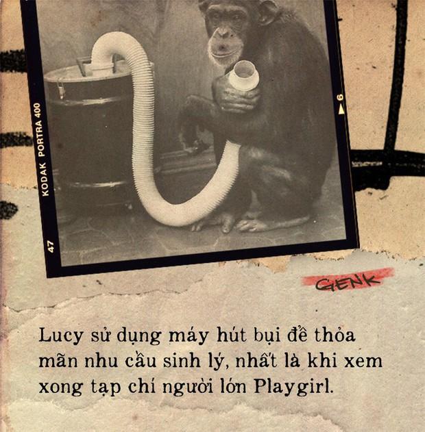 Câu chuyện đau lòng về Lucy, con tinh tinh vẫn tưởng mình là người - Ảnh 4.