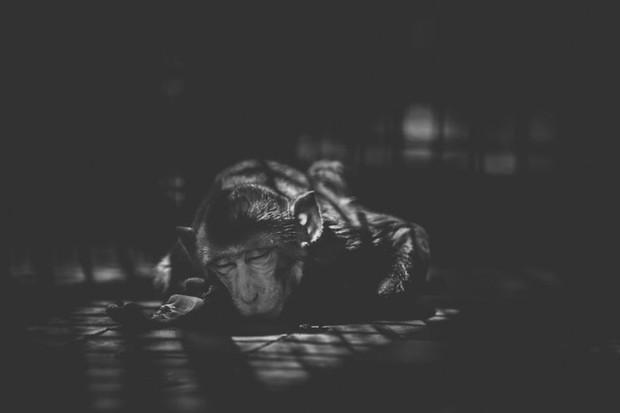 Cuộc sống cô độc của động vật trong sở thú ở Bangladesh - Ảnh 1.