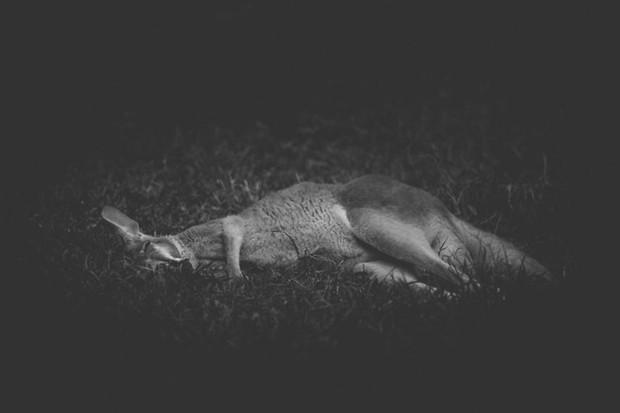 Cuộc sống cô độc của động vật trong sở thú ở Bangladesh - Ảnh 2.
