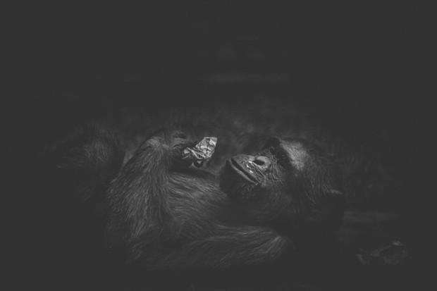 Cuộc sống cô độc của động vật trong sở thú ở Bangladesh - Ảnh 11.