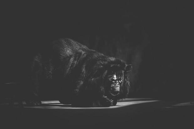 Cuộc sống cô độc của động vật trong sở thú ở Bangladesh - Ảnh 12.
