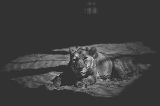 Cuộc sống cô độc của động vật trong sở thú ở Bangladesh - Ảnh 4.