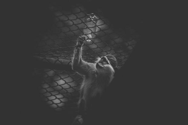 Cuộc sống cô độc của động vật trong sở thú ở Bangladesh - Ảnh 6.