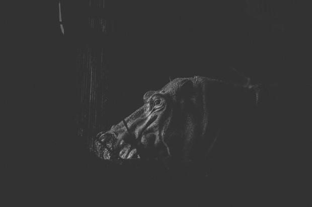 Cuộc sống cô độc của động vật trong sở thú ở Bangladesh - Ảnh 8.
