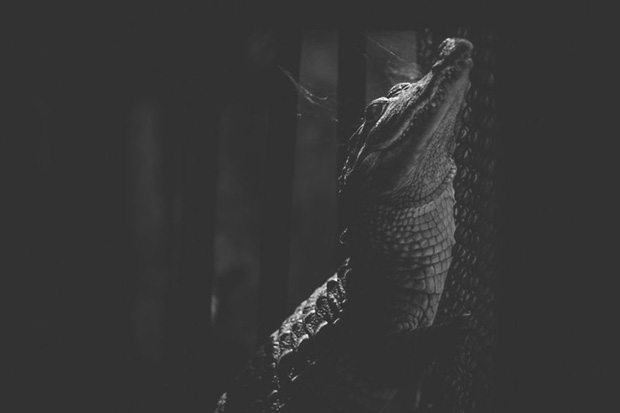 Cuộc sống cô độc của động vật trong sở thú ở Bangladesh - Ảnh 10.
