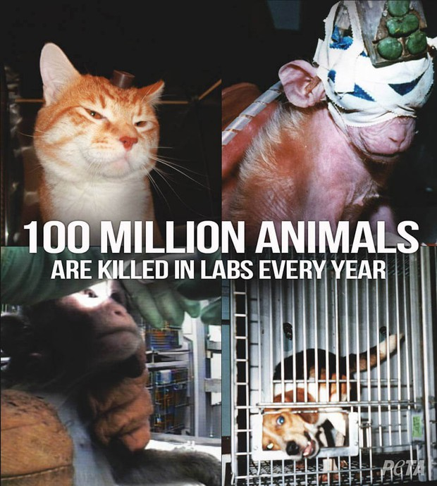 5 thí nghiệm tàn nhẫn đến rơi nước mắt trên động vật vẫn đang diễn ra mỗi ngày - Ảnh 1.